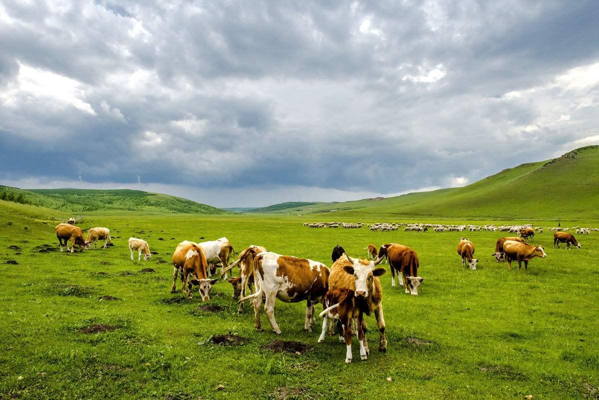 一,简述牛,羊生理结构与草料的重要性